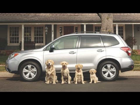 Top 10 The Best Cute and Funny Dog Car Commercials of All Time