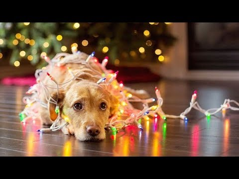 Top 10 Funniest Christmas Commercials Ever Made! (Cute Hilarious Christmas Adverts 2018)