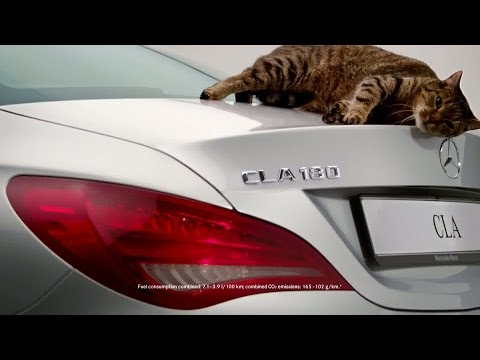 Top 3 The Best Cat Car Commercials Ever Created